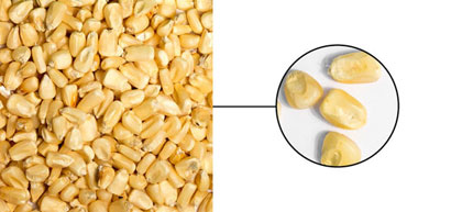Weißer Mais