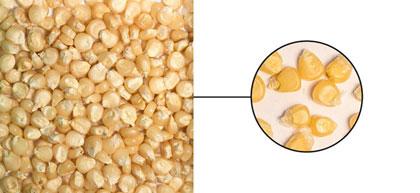 Pearl corn